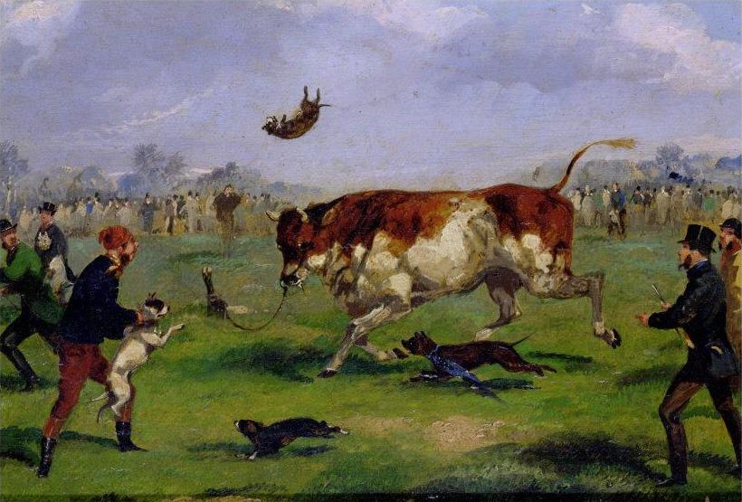 bull baiting Samuel_Henry_Alken_-_Bull_Baiting