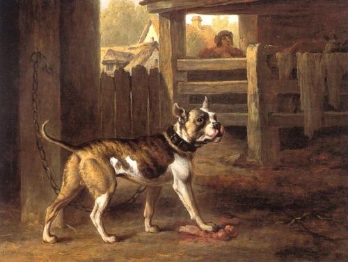 bulldog Philip_Reinagle_-_Bulldog