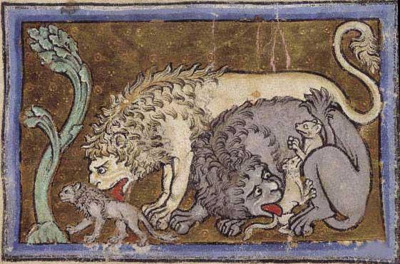 lions img4535
